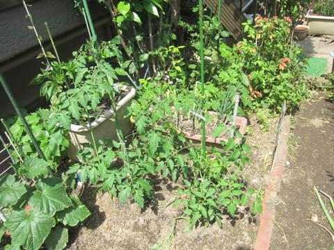 1畳菜園.JPG